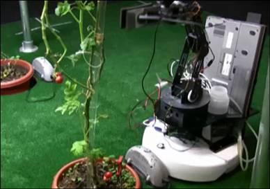 robot tukang kebun
